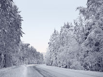 Snow-covered forest road between snowy fir trees and pines in a winter forest in the icy mist Royalty Free Stock Image