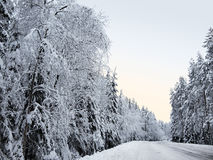 Snow-covered forest road between snowy fir trees and pines in a winter forest in the icy mist Stock Photo