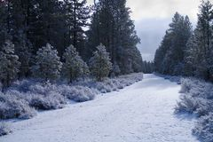 Snow covered forest road Stock Photo