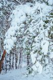 Snow-covered forest road, winter landscape. Cold Royalty Free Stock Photo