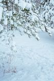 Snow-covered forest road, winter landscape. Cold Royalty Free Stock Photography