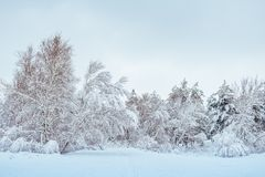 Snow-covered forest road, winter landscape. Cold Royalty Free Stock Images