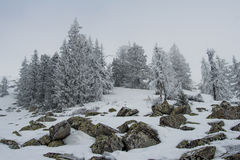 Snow-covered forest on the slopes of the mountain. Winter landscape Royalty Free Stock Photo
