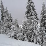 Snow-covered forest royalty free stock image