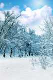 The snow-covered forest in sunny day. Stock Photography