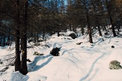Snow Covered Forest Royalty Free Stock Images