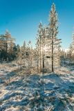 Snow Covered Forest Under Clear Blue Sky Royalty Free Stock Image