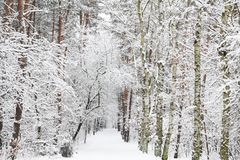 Snow covered forest - Winter impression Royalty Free Stock Photos