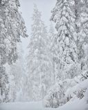 Snow covered forest winter Royalty Free Stock Image