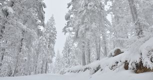 Snow covered forest winter Stock Images