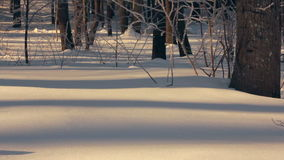 Snow covered forest in winter. Snow background. Panorama of winter forest. White snow in winter forest. Winter background. Sunlight on snow in winter forest stock video footage