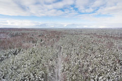 The snow-covered forest. In winter, view from above Stock Images
