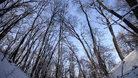 Snow covered forest in winter. stock video footage