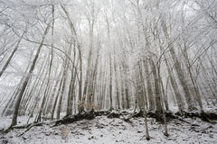 Snow covered forest Stock Images
