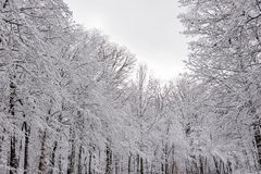 Snow covered forest is a winter wonderland Stock Photo