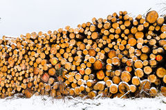 Snow covered fresh cut firewood stack at winter. Royalty Free Stock Photography