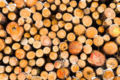 Snow covered fresh cut firewood stack at winter. Stock Photo