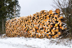 Snow covered fresh cut timber stack at winter. Royalty Free Stock Photo