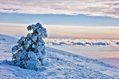 Snow-covered fur-tree royalty free stock photos