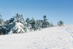 Snow-covered fur-tree Stock Photos