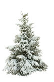 Snow-covered fur-tree on a white Royalty Free Stock Image