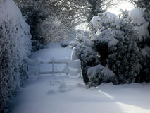 Snow Covered Garden. Trees and fences covered in snow Stock Photography
