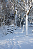 Snow covered gate in wood Stock Photography