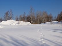 Snow-covered glade Royalty Free Stock Photography