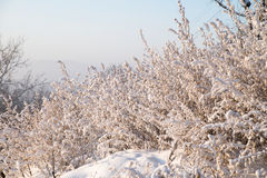 Snow-covered gras Royalty-vrije Stock Foto