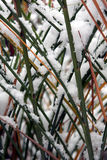 A snow-covered grass Royalty Free Stock Image