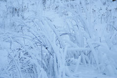 Snow-covered grass  on the field Royalty Free Stock Photo