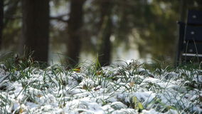 Snow covered grass,swaying in wind,Woods tree and jungle. stock video footage