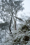 Snow covered grass. Grass weeping down under the weight of snow with trees in the background Royalty Free Stock Photography