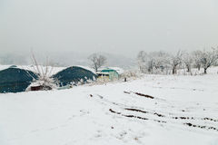 Snow-covered greenhouse and winter landscape. In Korea Royalty Free Stock Images