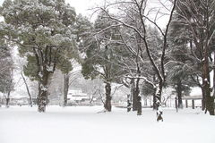 Snow covered ground. A heavy fall of snow covered the ground Royalty Free Stock Photography