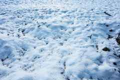 Snow Royalty Free Stock Photography