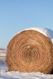 Snow-covered hay bale Stock Images