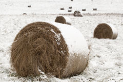 Snow covered hay rolls Stock Images