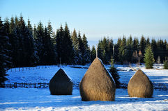 Snow covered haystacks at winter Royalty Free Stock Photo
