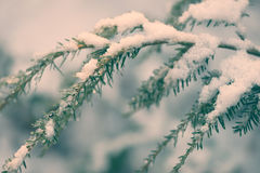 Snow Covered Hemlock Branch - Retro Royalty Free Stock Photo