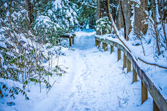 Snow covered hiking path in the forest Stock Photo