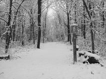 Snow covered hiking trail in forest. Snow covered walking and hiking trail in forest Royalty Free Stock Image