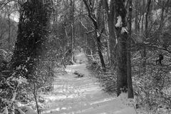 Snow covered hiking trail. A snow covered hiking trail well travelled with tracks in the snow leading deeper into the forest Royalty Free Stock Photography