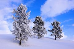 Snow covered hill and frosty trees Royalty Free Stock Photos