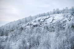 The snow-covered hill. The rise of the snow-covered hill covered with forest Stock Image