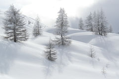 Snow covered hills and trees shortly before blizzard. With beautiful shadows Stock Image