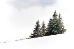 Snow covered hillside. Winter landscape of snow covered hillside with green pine trees against white cloudy skies Stock Photo