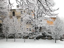 Snow covered house and trees. In a winter day Royalty Free Stock Photos