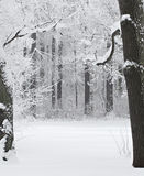 Snow-covered hout Stock Afbeelding