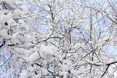 Snow-covered hout Stock Fotografie